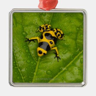 《昆虫》マルハナバチの毒投げ矢のカエル シルバーカラー正方形オーナメント