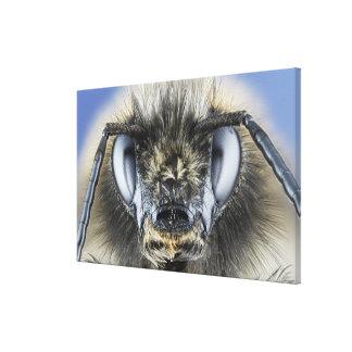 《昆虫》マルハナバチの頭部 キャンバスプリント
