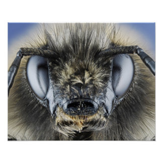 《昆虫》マルハナバチの頭部 ポスター