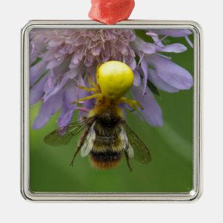 《昆虫》マルハナバチを持つくも(Misumenaのvatia)を斜め飛行して下さい メタルオーナメント