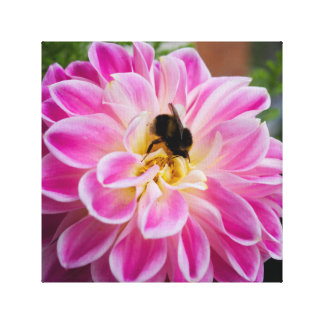《昆虫》マルハナバチを持つピンクのダリア キャンバスプリント