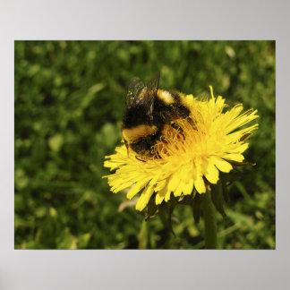《昆虫》マルハナバチ1 ポスター