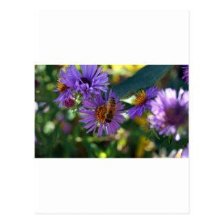 《昆虫》マルハナバチ ポストカード