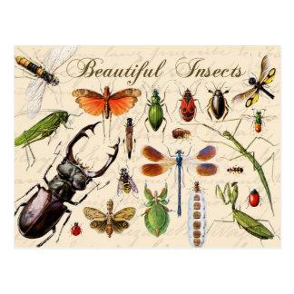 昆虫-地球の最も多様な有機体 ポストカード