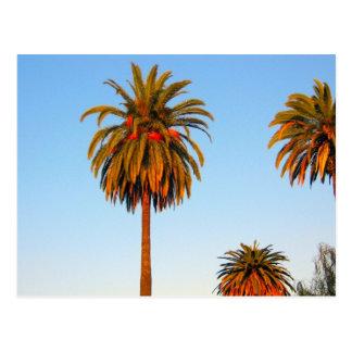 明るいカリフォルニアヤシの木の郵便はがき ポストカード