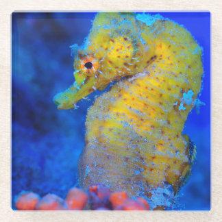 明るいタツノオトシゴ|の海馬 ガラスコースター