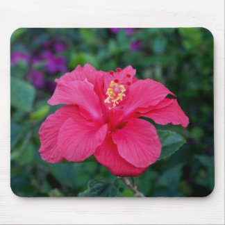 明るいピンクのハイビスカスの写真 マウスパッド
