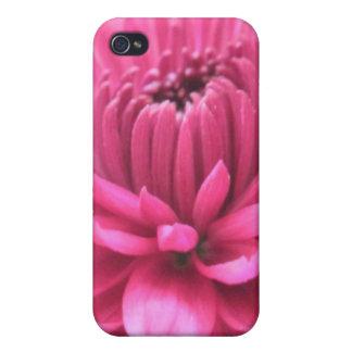 明るいピンクの花のマゼンタのミイラの写真のプリントの箱 iPhone 4 CASE