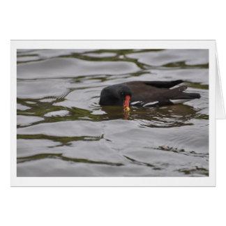 明るい水の鳥 カード