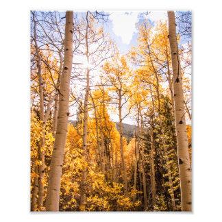 明るい秋の《植物》アスペンの葉 フォトプリント