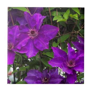 明るい紫色のJackmaniiのクレマチスのつる植物 タイル