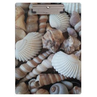 明るい貝殻、クリップボード、夏のビーチ、自然