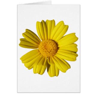 明るい黄色chamomile カード