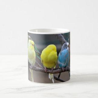 明るくカラフルなインコBudgiesは鳥をオウム返しします コーヒーマグカップ