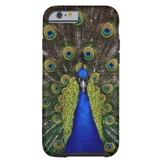 明るくガーリーでかわいらしい孔雀の鳥の自然動物 iPhone 6 タフケース