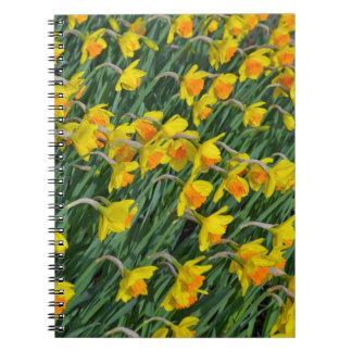 明るく黄色い春のラッパスイセンの庭 ノートブック