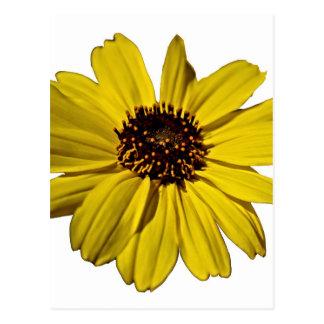 明るく黄色い花、デイジー ポストカード