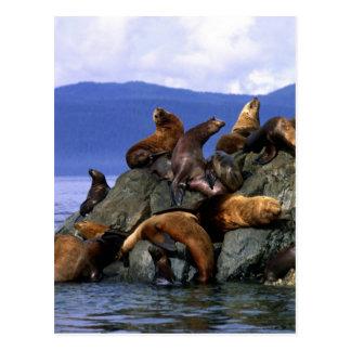 星のアシカアラスカ; 米国 ポストカード