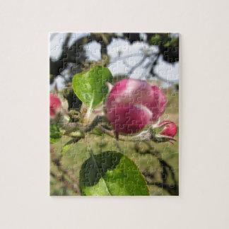 春のぼやけられたりんごの花の閉鎖した芽 ジグソーパズル