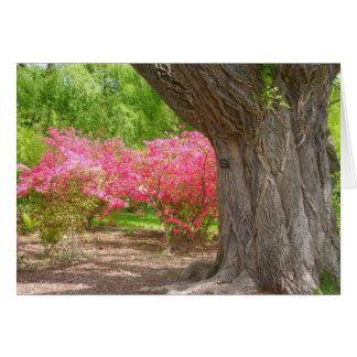 春のアーノルドの植物園 カード