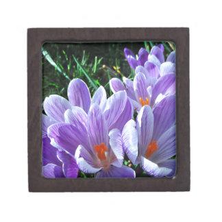 春のクロッカスの紫色 ギフトボックス