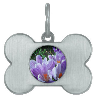 春のクロッカスの紫色 ペットネームタグ
