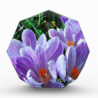 春のクロッカスの紫色 表彰盾