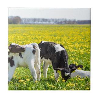 春のタンポポ草原の3つの生まれたばかりのなcalfs タイル