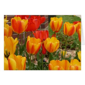 春のチューリップカード カード