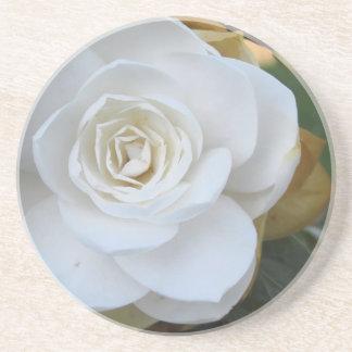 春のツバキの白い花 コースター