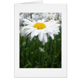 春のデイジー カード