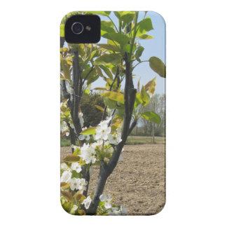 春のナシ木の活気付く枝 Case-Mate iPhone 4 ケース