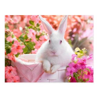 春のノウサギ ポストカード