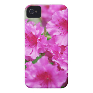 春のピンクのシャクナゲの花 Case-Mate iPhone 4 ケース