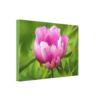 春のピンクのシャクヤクの花のモダンのキャンバス キャンバスプリント
