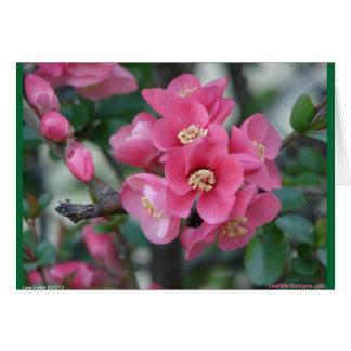 春のピンクの咲く花盛りのマルメロ カード