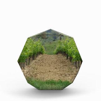 春のブドウ園。 タスカニー、イタリア 表彰盾
