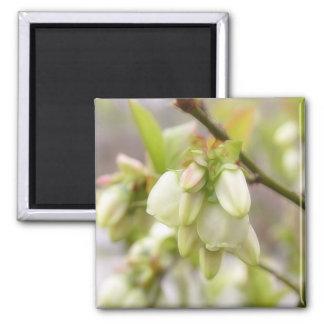 春のブルーベリーの花 マグネット
