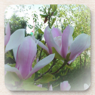 春のマグノリアの花 コースター
