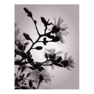 春のマグノリア ポストカード