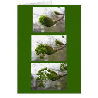 春の出現 カード