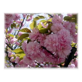 春の咲くこと ポストカード