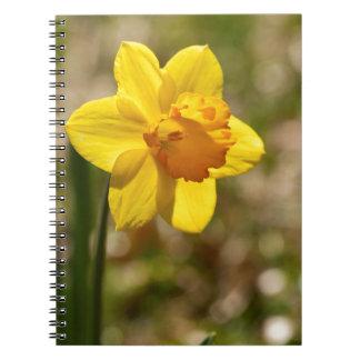 春の咲く黄色いラッパスイセンの花 ノートブック