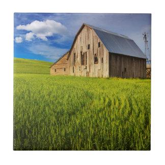 春の小麦畑1によって囲まれる古い納屋 タイル