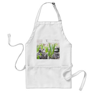 春の庭のクロッカスの芽 スタンダードエプロン