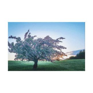 春の日の出、夜明けに開花した木 キャンバスプリント