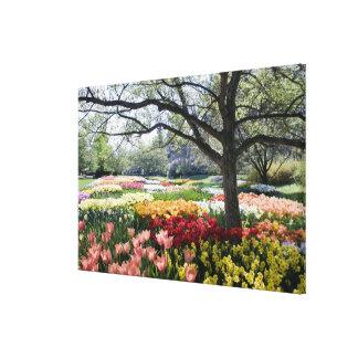 春の朝の花の分野 キャンバスプリント