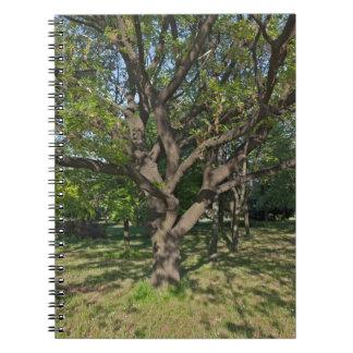 春の木 ノートブック