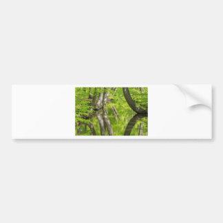 春の森林の水が付いているブナの木のトランク バンパーステッカー