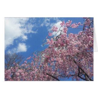 春の泣くさくらんぼ カード